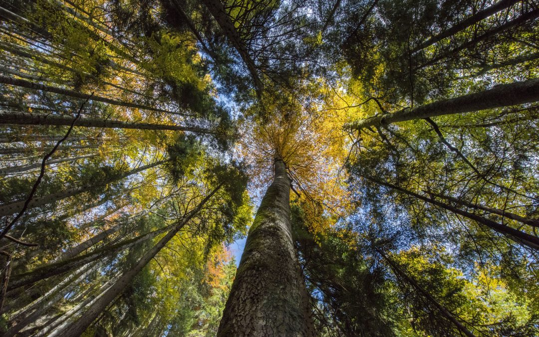 Rewilding Knowledge – Are tree planting initiatives really helping the planet?